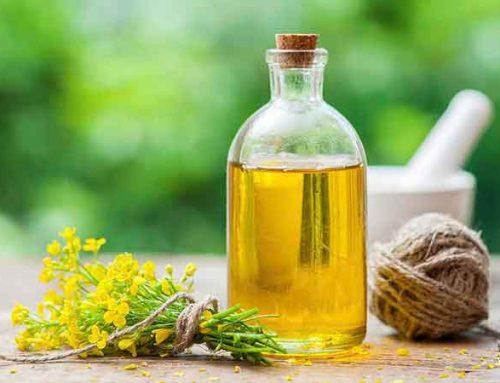 Methods for making vegetable oil