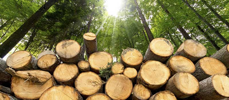 wood biomass energy