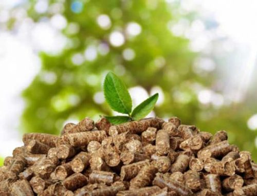 Status Quo And Development of Biomass Energy in China
